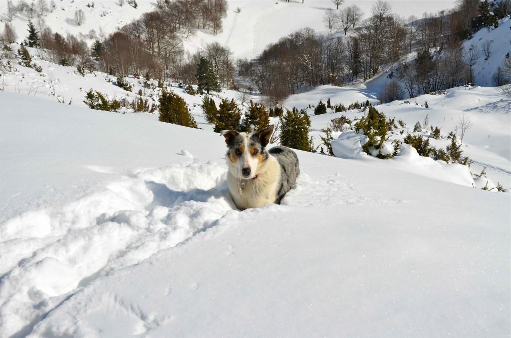 Perro en la excursión de raquetas por el Val Louron. Altos Pirineos. Copyright Hernando Reyes