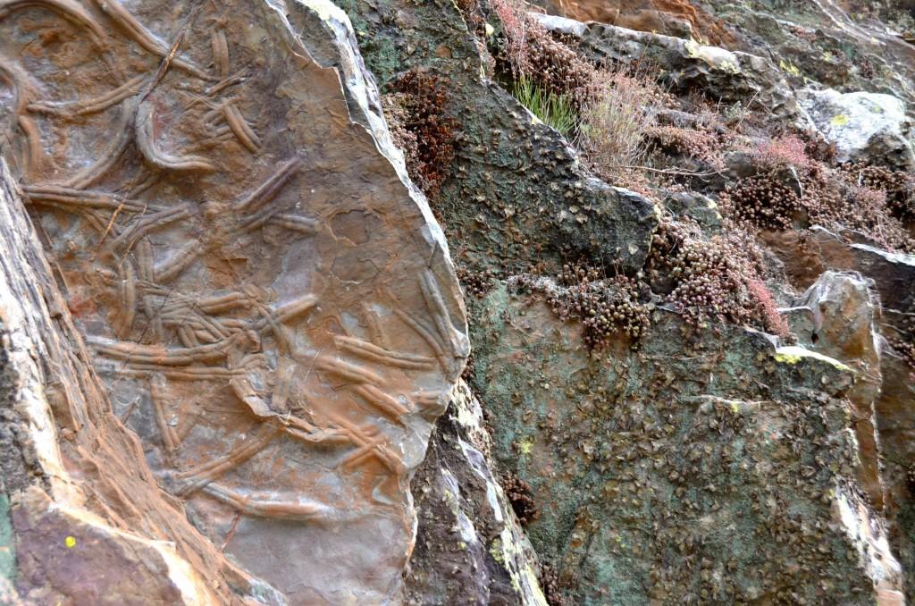 Fosiles en el Parque Icnológico de Penha Garcua. Portugal. Copyright Hernando Reyes