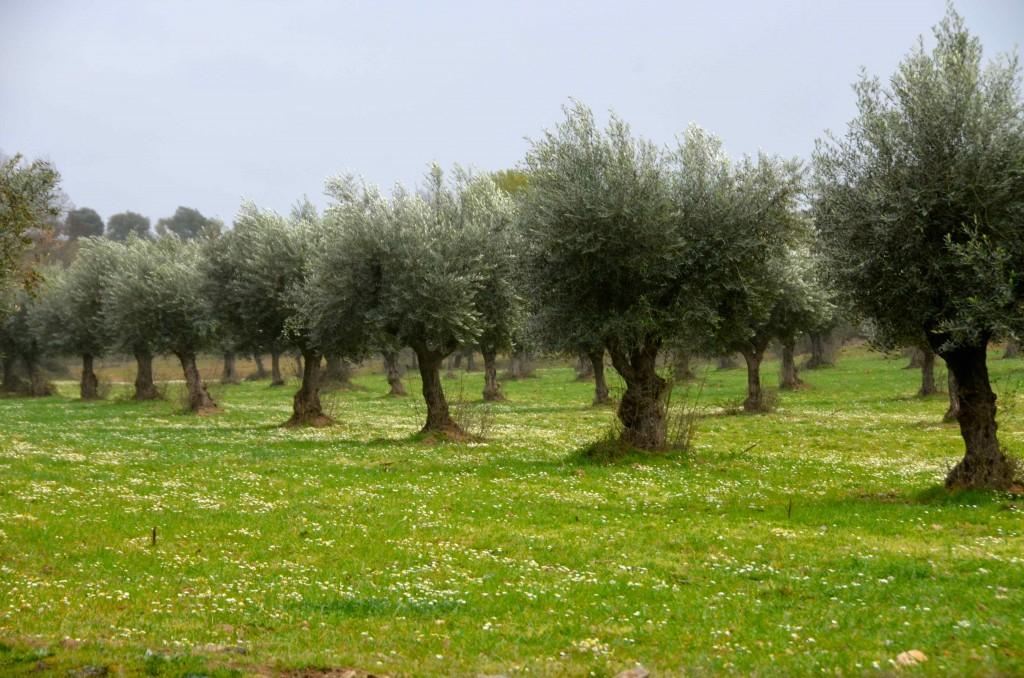 Campos de Valle Feitoso en Monfortinho, Portugal. Copyright Hernando Reyes